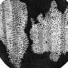 suromicroscopi