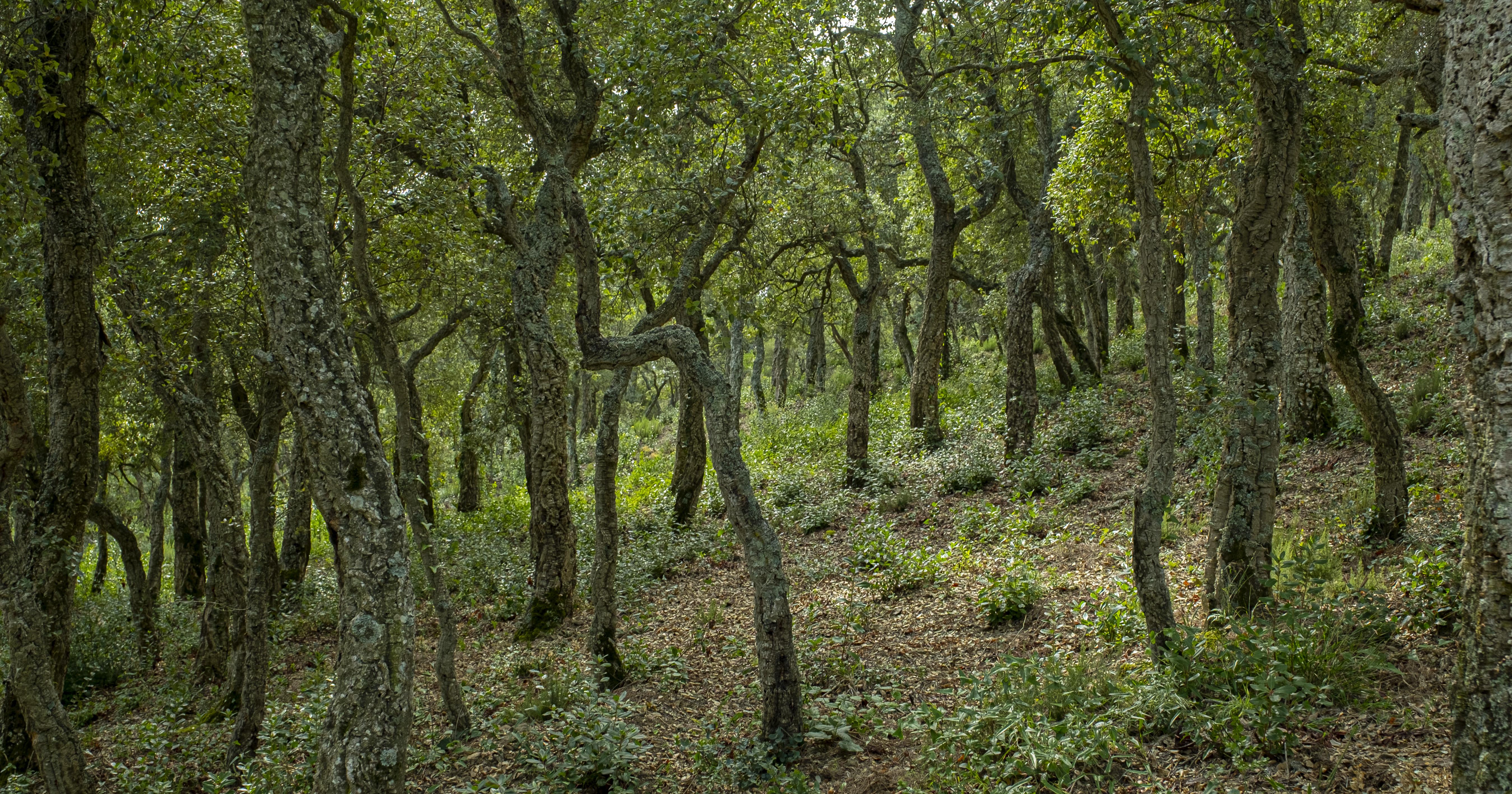 boscos-llei-canvi-climatic